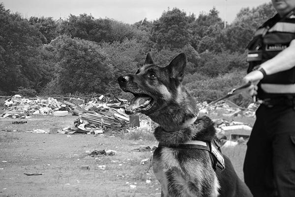 Manned Guarding Dog Handling