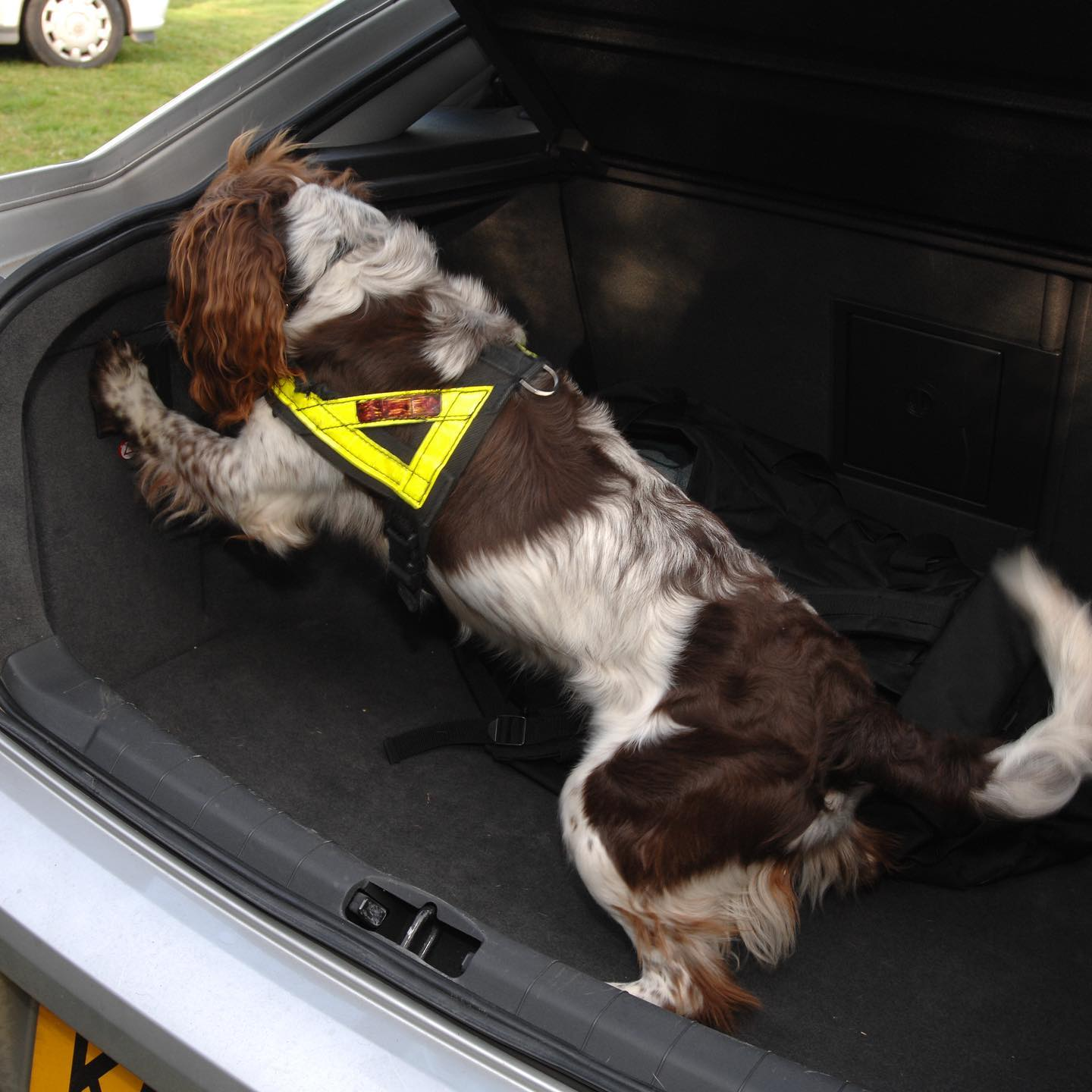 Detection Dog Services Now Available with Herongrange